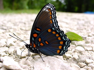 close-up photo photography of black and orange butterfly
