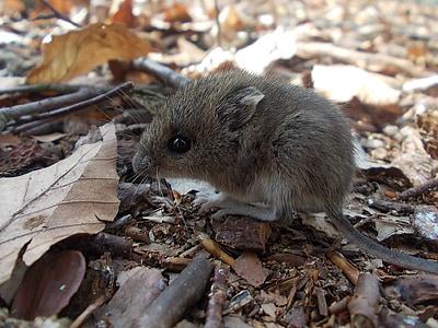 closeup photo of gray mouse
