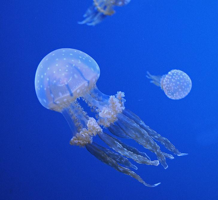three jellyfishes