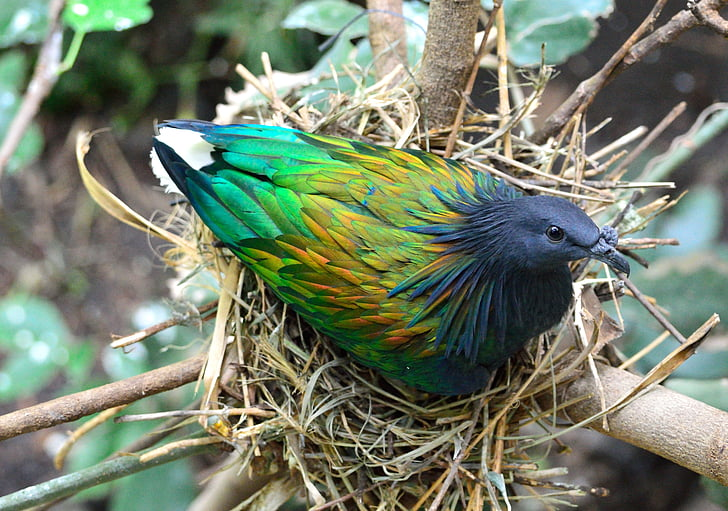 green and black bird on nest