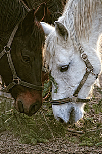 brown and white horses facing each other