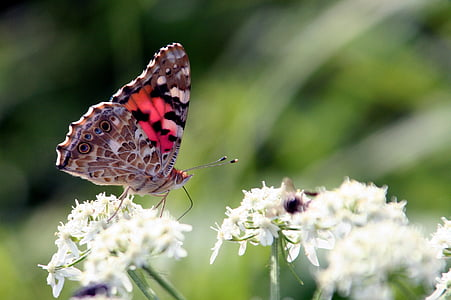 shallow focus photography of butterfly on white flower