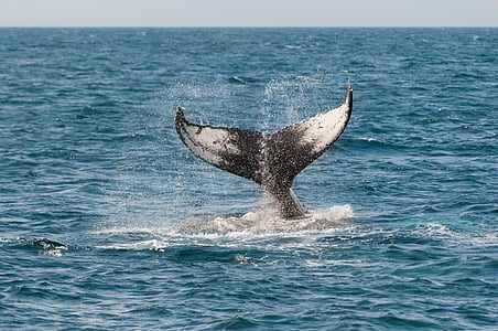 whale tail above sea level