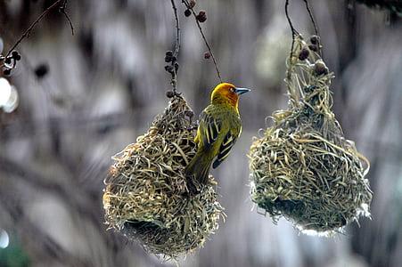 selective-focus photoghraphy green and yellow bird
