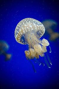 white jellyfish underwater