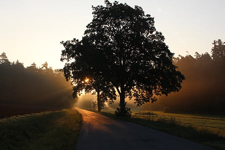 silhouette of tree near road during sunset