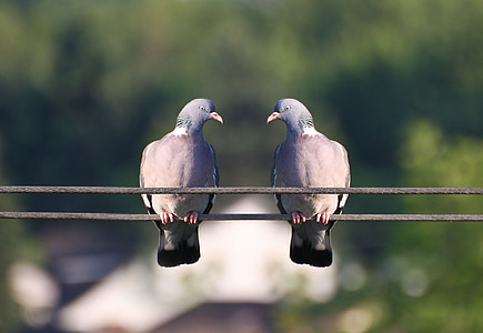 two grey pigeons on wire during daytime