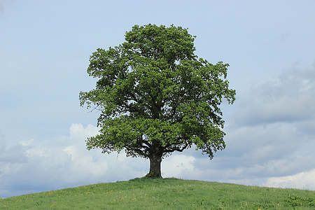 tree growing on top of hill