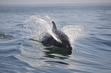black dolphin swimming on body of water