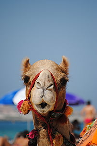 shallow photography of brown camel
