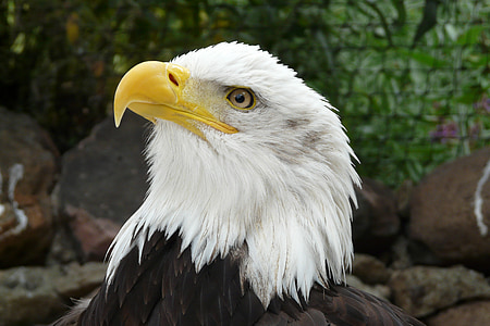shallow focus photography of American Eagle