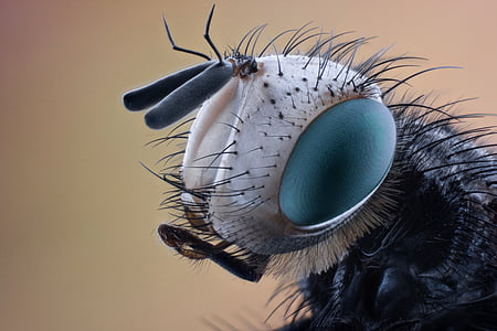 closeup photo of black and gray insect