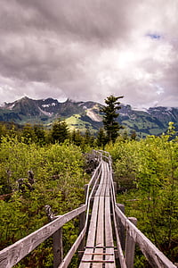 brown wooden bridge surrounded by plants