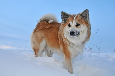 white and tan dog stands on ice field at daytime