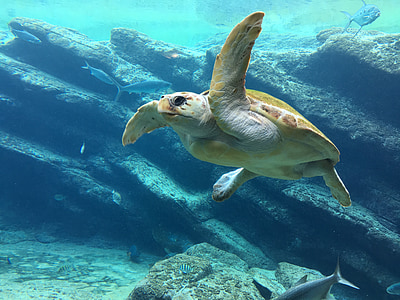 photo of brown turtle