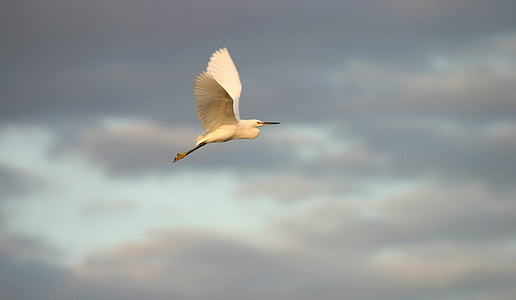 selective focus photography of long-beaked white feathered bird