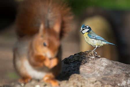 selective focus photography of bird perching on wood log