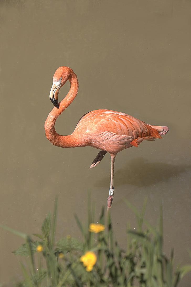 orange flamingo beside yellow petaled fower