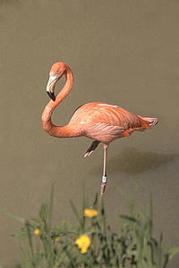 orange flamingo beside yellow petaled fower