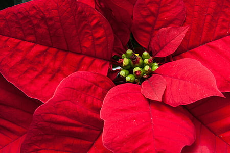 red and green petaled plant