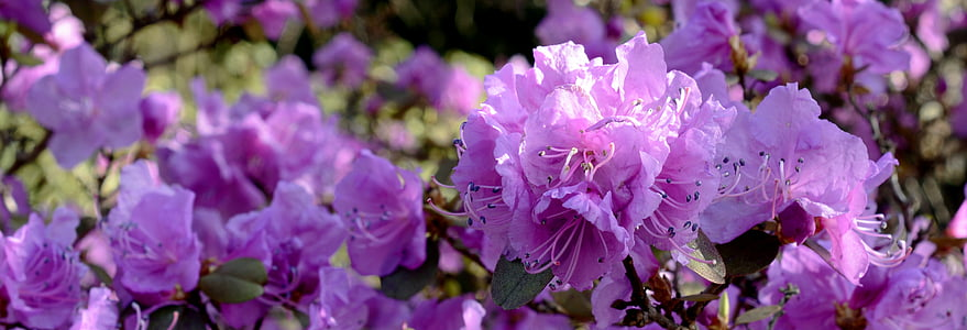 photo of purple flowers