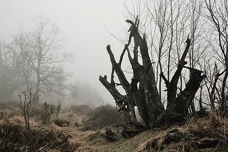 macro photography of bare tree
