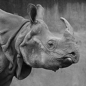 grayscale photo of rhinoceros