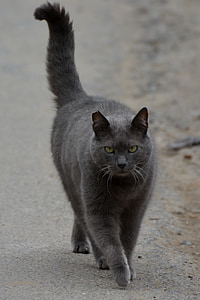 gray cat on gray soil