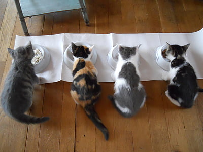 four cats eating on pet bowls