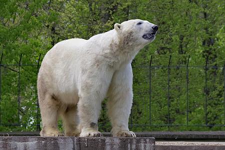 white polar bear standing on 4 legs during daytime