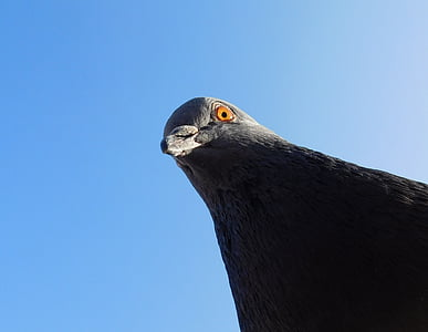 low angle photography of pigeon