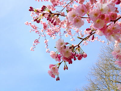 tree with white and pink flowers