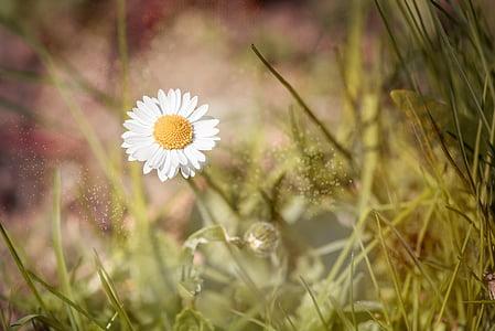 white chamomile closeup photography at daytime