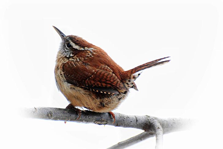 brown long-beak bird perching on twig