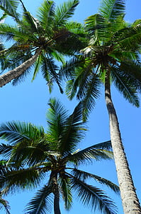 green palm trees during daytime low angle photography