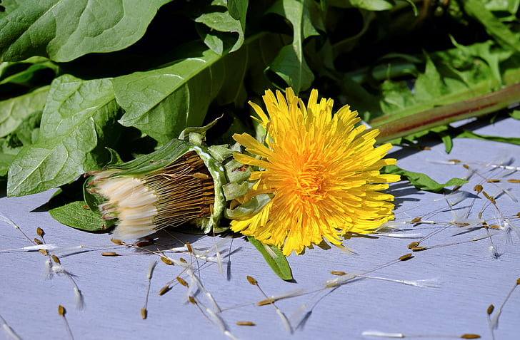 yellow dandelion flower on floor