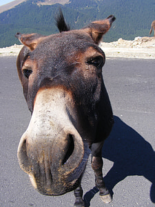 brown donkey standing on road photo during daytime