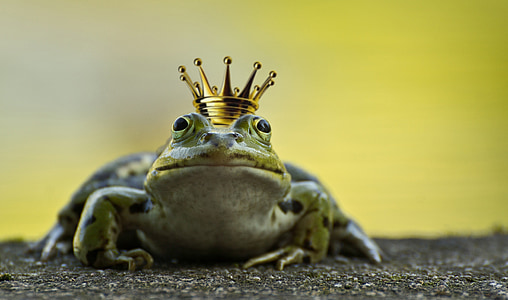 green frog with gold-colored crown