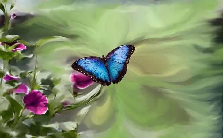 Macro Photo Of Morpho Erfly On Pink Flower