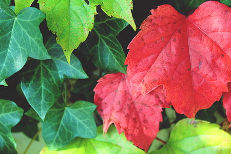 fill the frame photography of red and green plant leaves