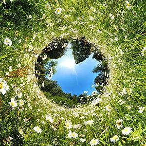 fish eye photography of white petaled flowers