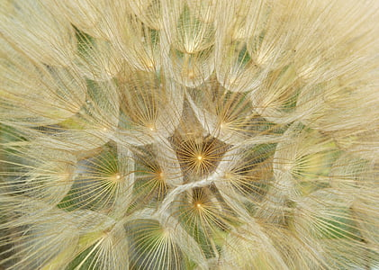 close-up photo of dandelions