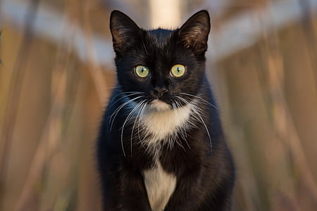 closeup photography of tuxedo cat