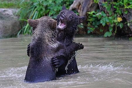two black bear fighting