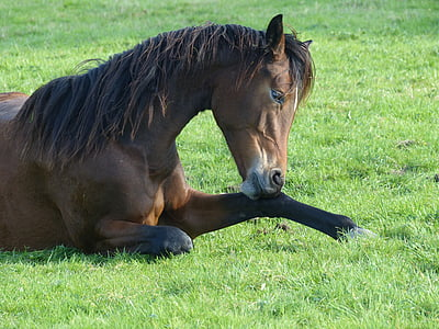 horse laying on grass