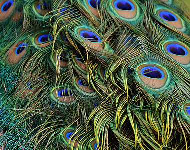 closeup photography of green and blue peacock feather