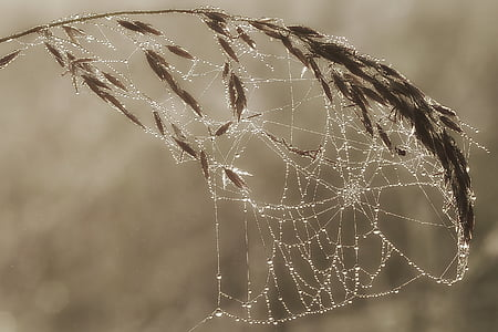 cobweb photo