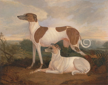 two white English whippets painting