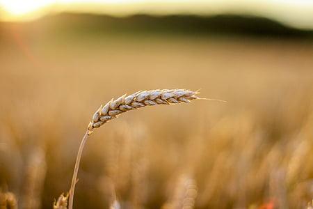 rice grain during daytime