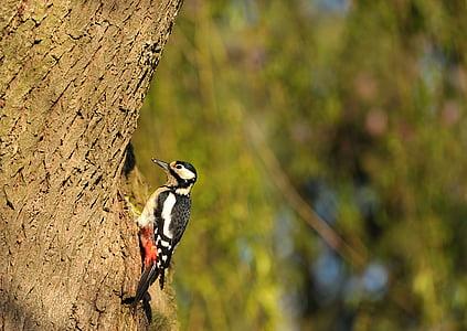 bird on brown tree